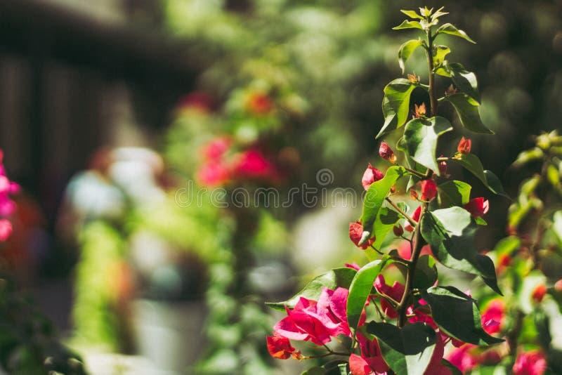 Macro Shot Of Pink Flowers royalty free stock photo