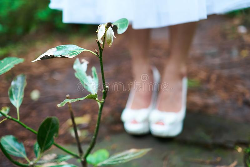 Macro shot of a plant with a woman in the background wearing white wedding dress and white heels slightly out-focused royalty free stock images