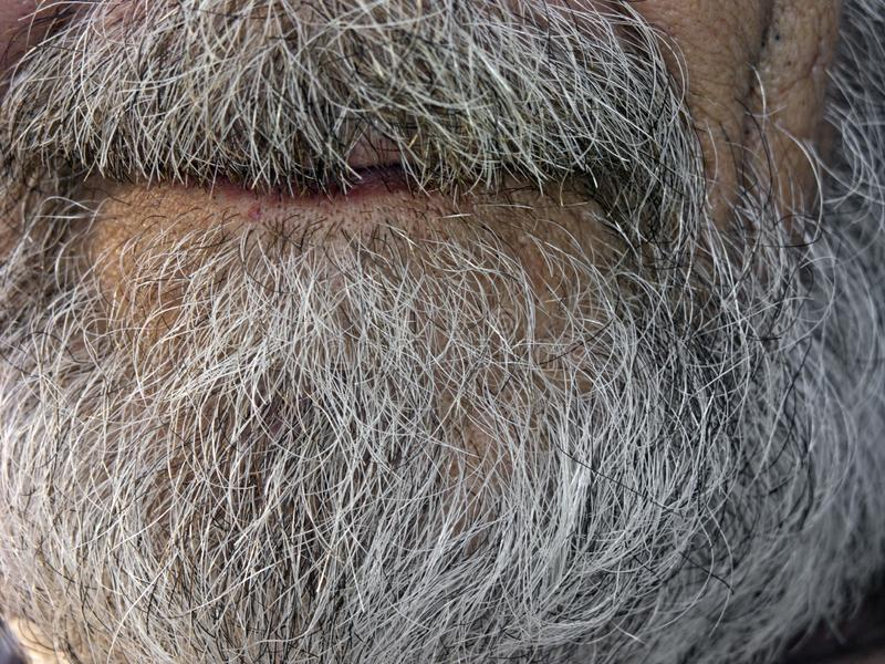Senior male grey beard stock photography