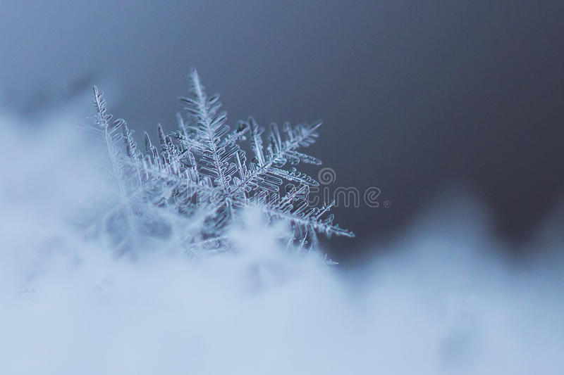 Macro Shot of Snow Flake. In blue stock photo