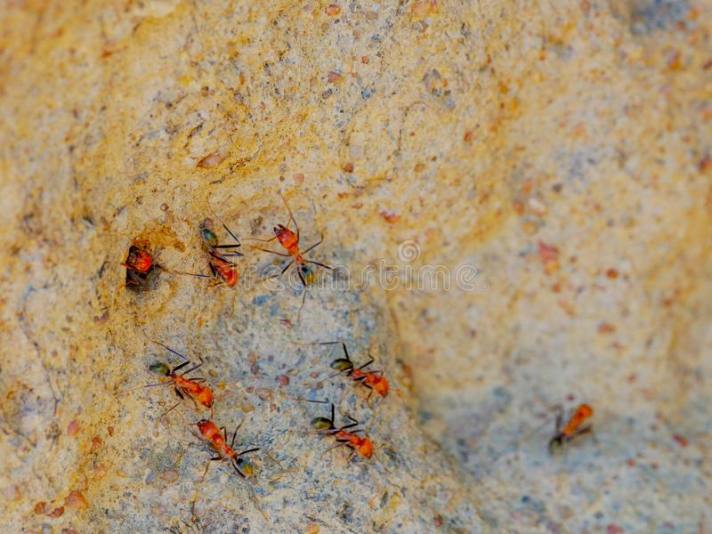 Macro shot of spinifex termites entering and exiting a cathedral termite mound in australia`s northern territory stock photos
