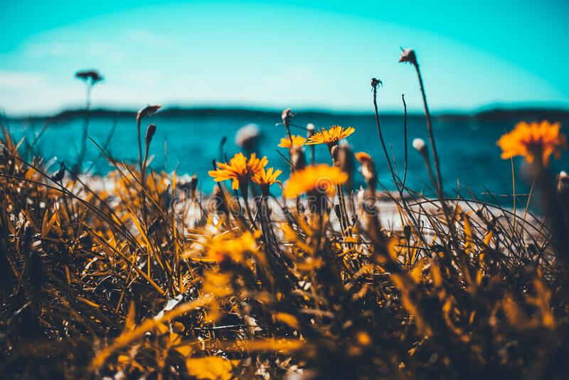 Macro Shot Of Sunflowers Free Public Domain Cc0 Image