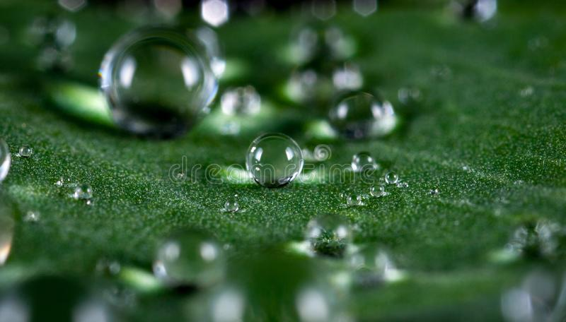 Macro Shot of Water Droplets royalty free stock images