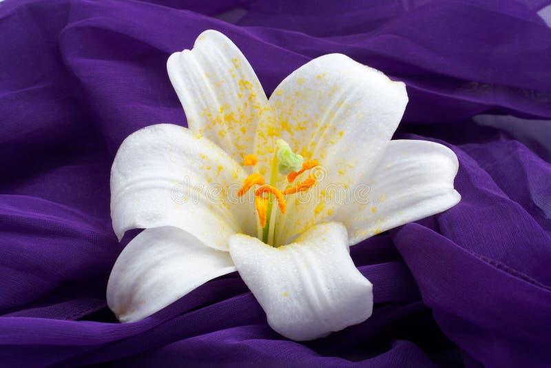 Macro shot white flower royalty free stock image