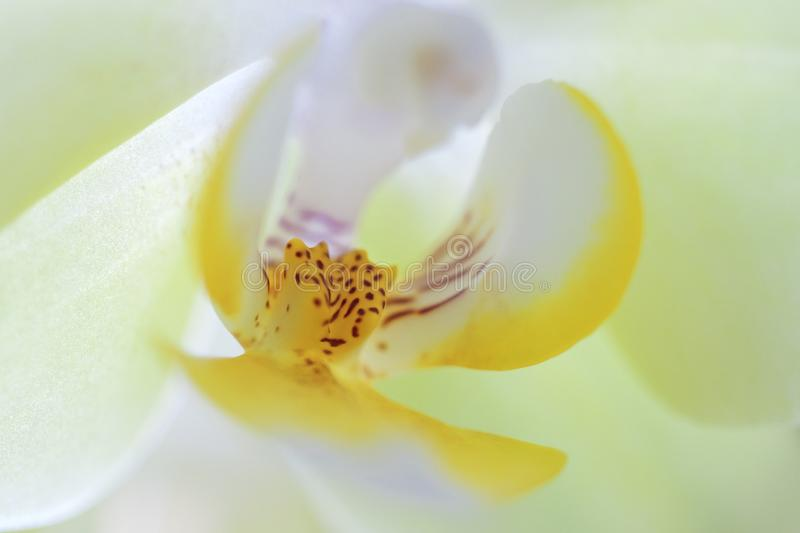 Macro shot of white orchidOrchidaceae.  stock photography