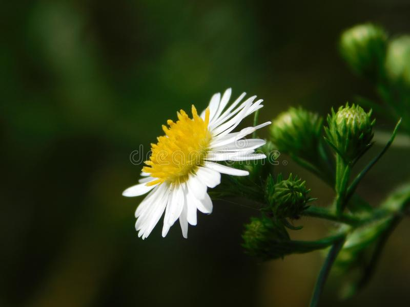 Wild flower on a plant. Macro shot of a wild flower on a plant with a green background royalty free stock photo