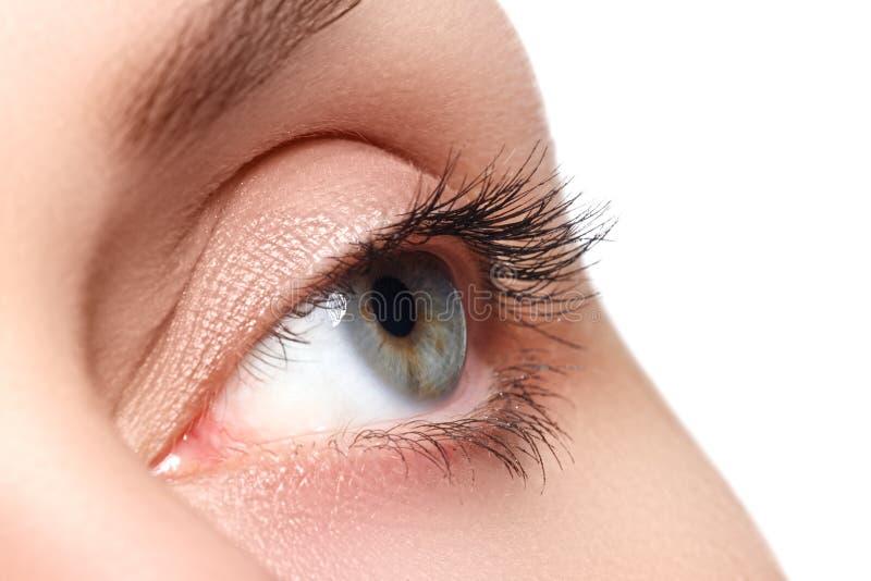 Macro shot of woman's beautiful eye with extremely long eyelashes. view, sensual look. Female eye with long eyelashes stock images