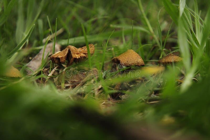 Macro silvestres de Hongos de grupo images libres de droits