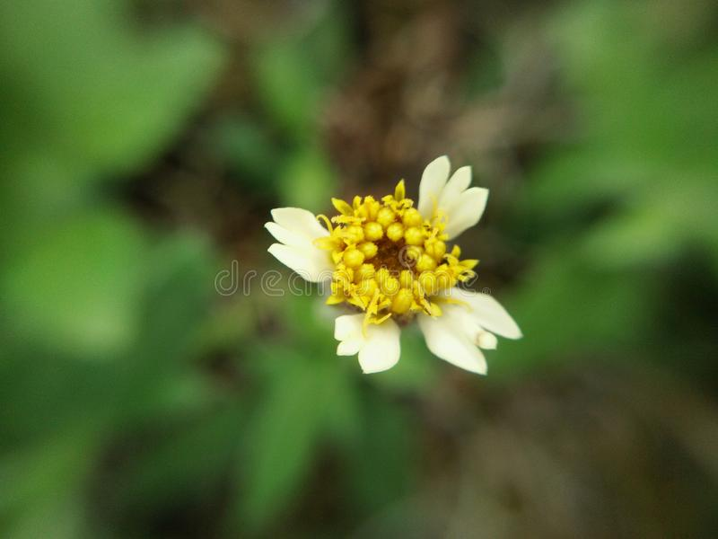Macro small weed flower stock photography