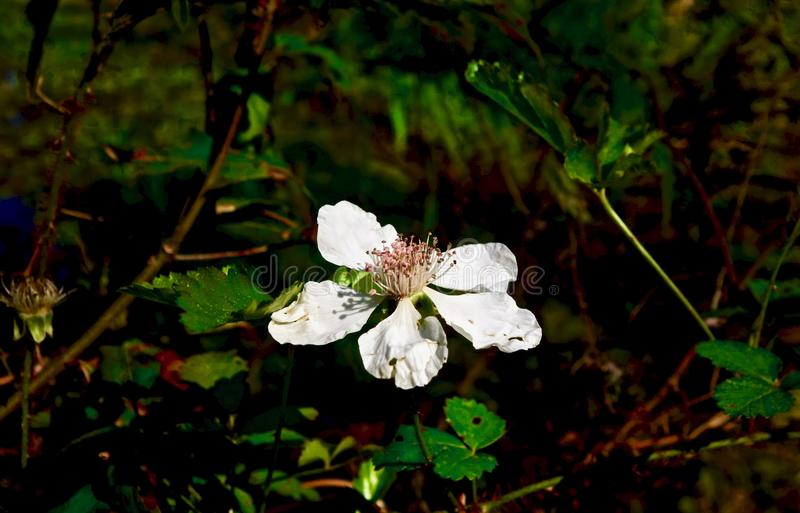 Macro of a small white flower growing next to a pond stock photography