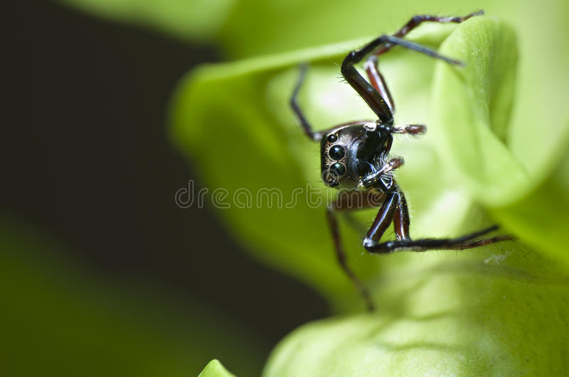 Macro Spider Stock Photos