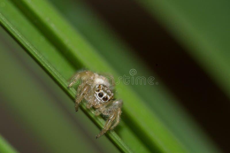 Macro spider stock photography