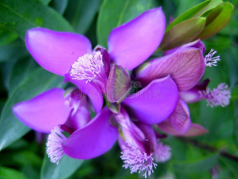Macro stampe di arti della carta da parati del fondo del bello piccolo fiore selvaggio immagine stock