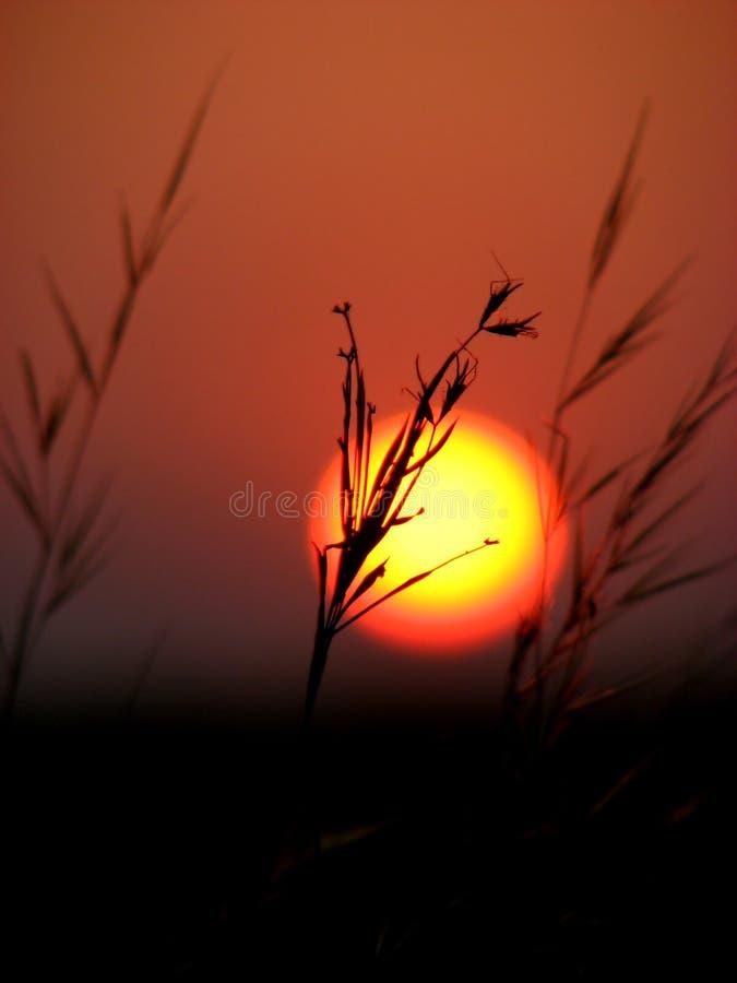Macro Sunset Stock Photos