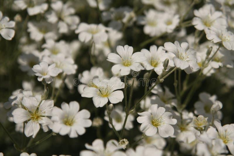 Macro sur la fleur blanche avec le fond de tache floue photographie stock libre de droits