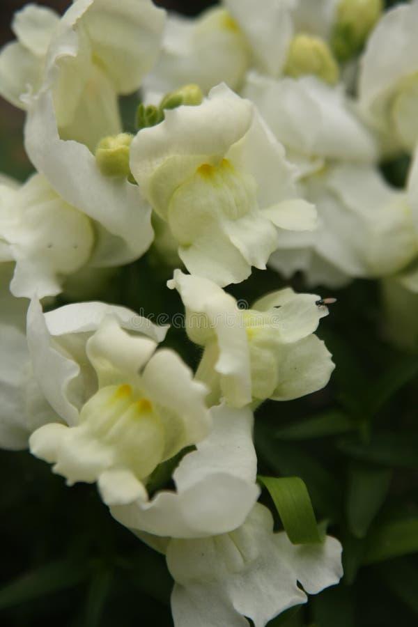 Macro sur la fleur blanche avec le fond de tache floue images libres de droits