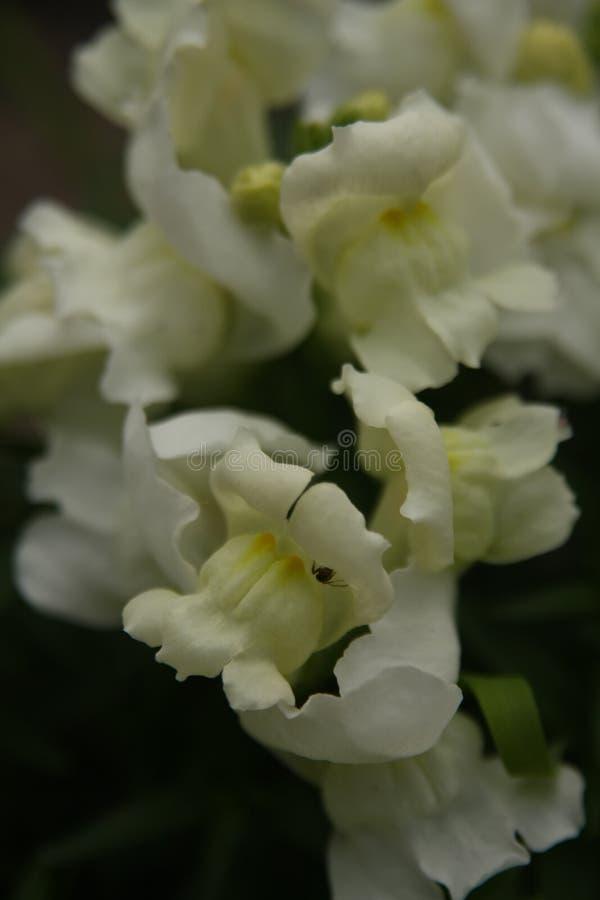 Macro sur la fleur blanche avec le fond de tache floue photographie stock