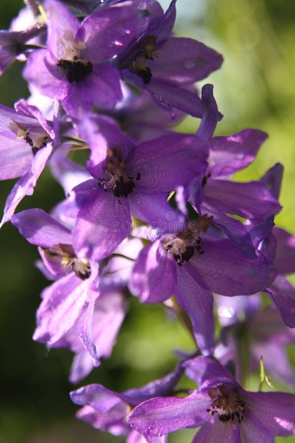 Macro sur la fleur pourpre avec le fond de tache floue images stock