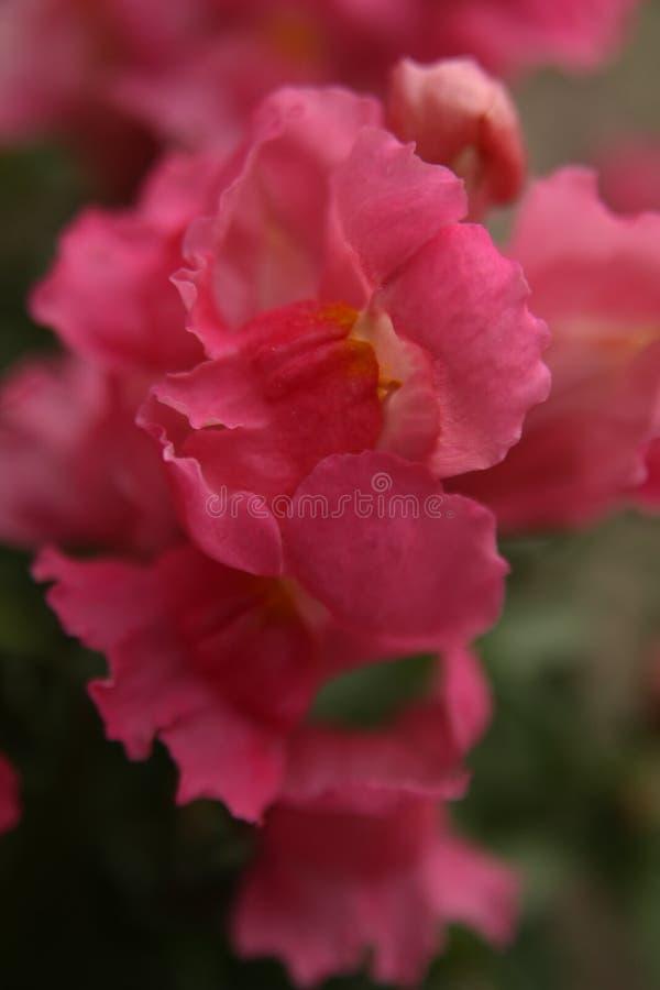 Macro sur la fleur rouge avec le fond de tache floue image stock