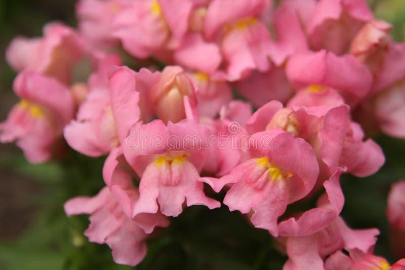 Macro sur la fleur rouge avec le fond de tache floue photo libre de droits