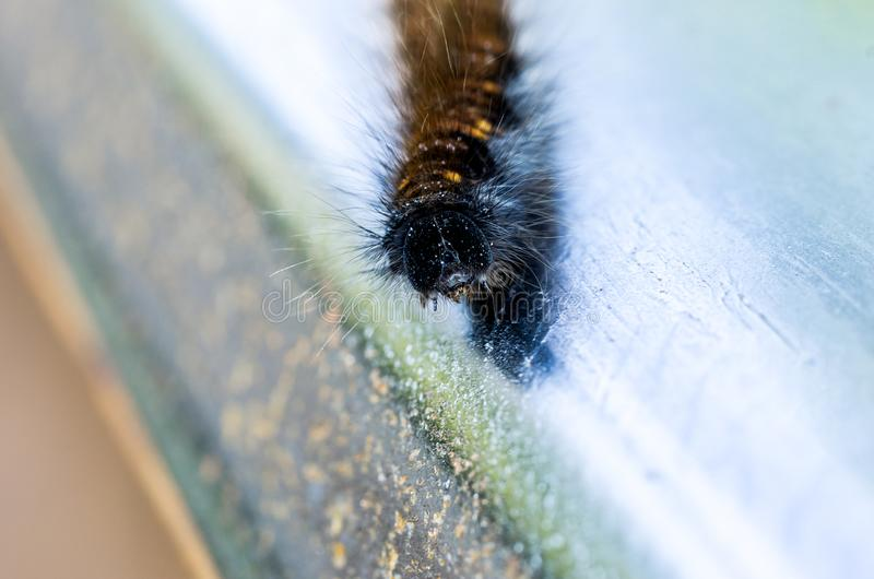Macro survey of the head of the forest caterpillar. Insect. stock photo