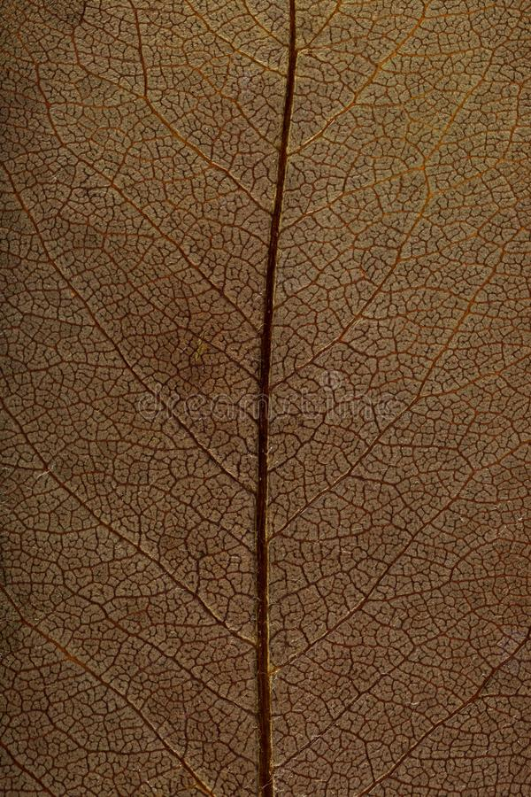 Macro texture of dry leaf plants for the background. Flat herbarium details.  stock photo