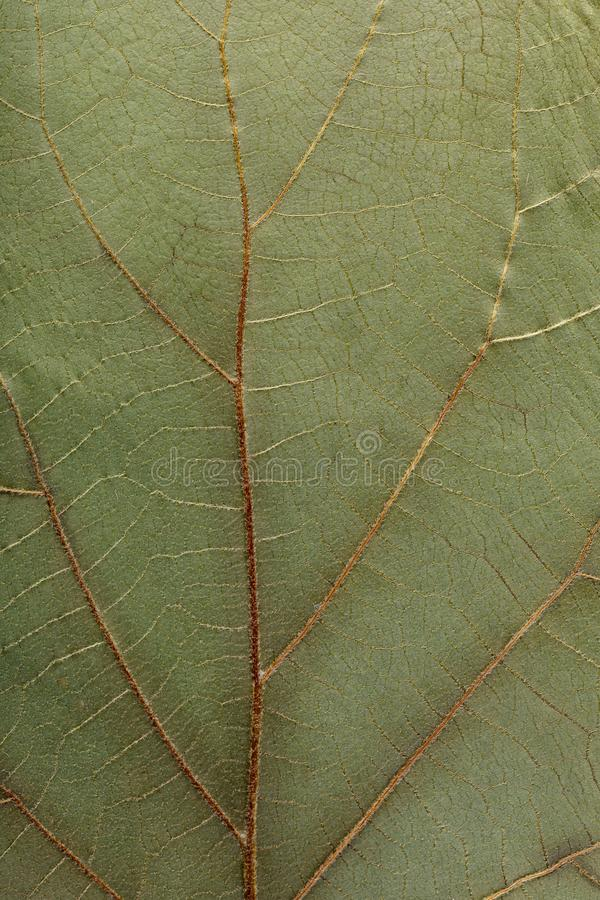 Macro texture of dry leaf plants for the background. Flat herbarium details.  stock images