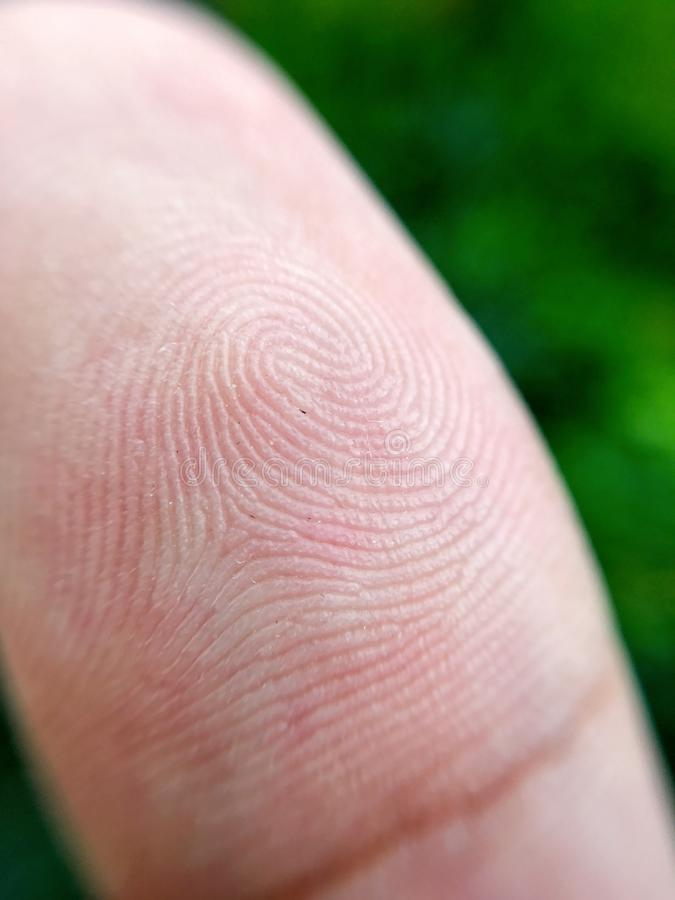 Macro of texture fingerprint. Close-up of people fingerprint stock photography