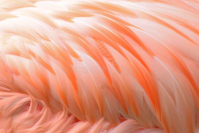 Macro texture of Flamingo bird feathers. In horizontal frame royalty free stock photos