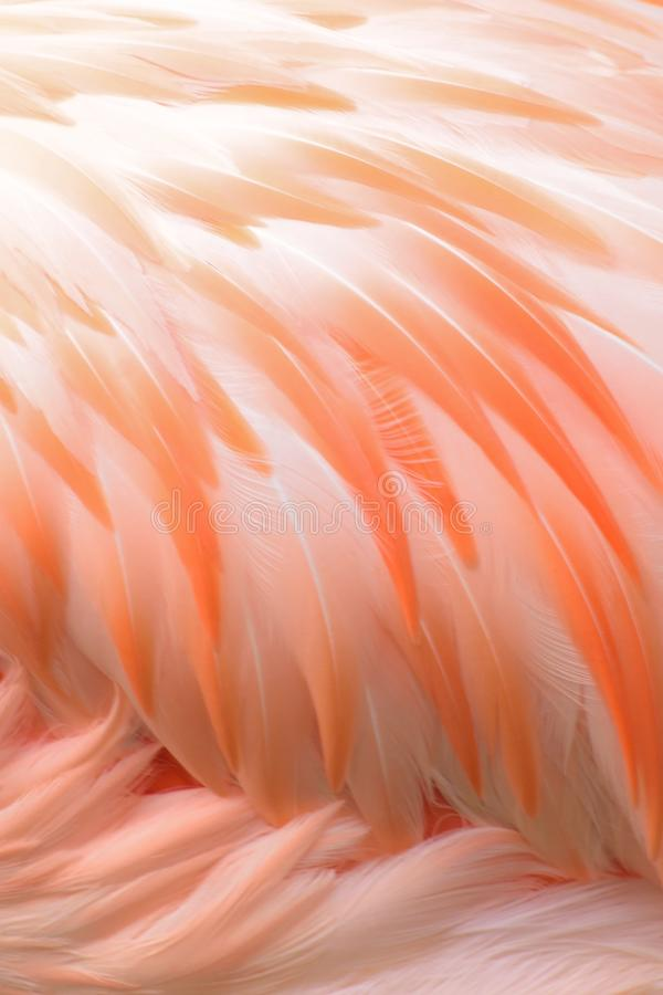 Macro texture of Flamingo bird feathers. In vertical frame stock images