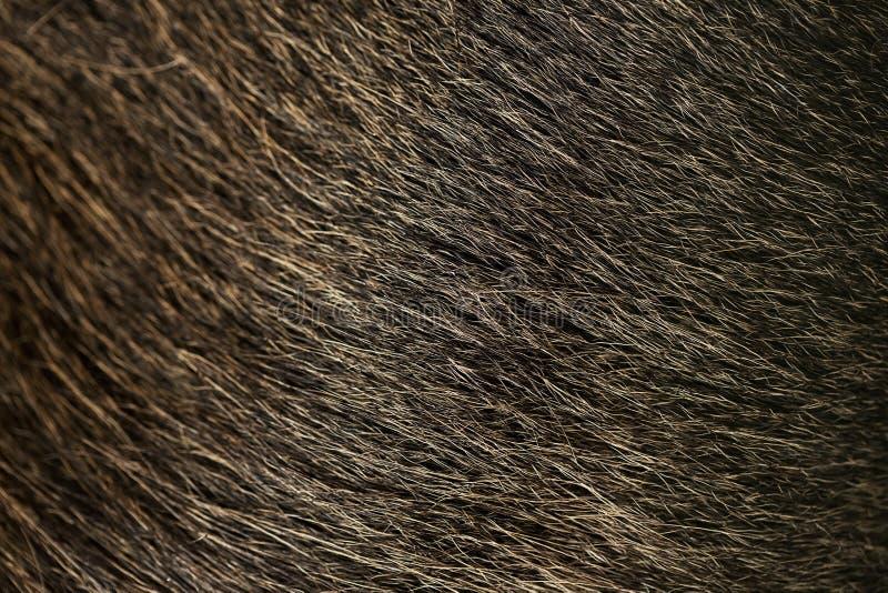 Macro texture of moose. Macro natural texture of moose stock images
