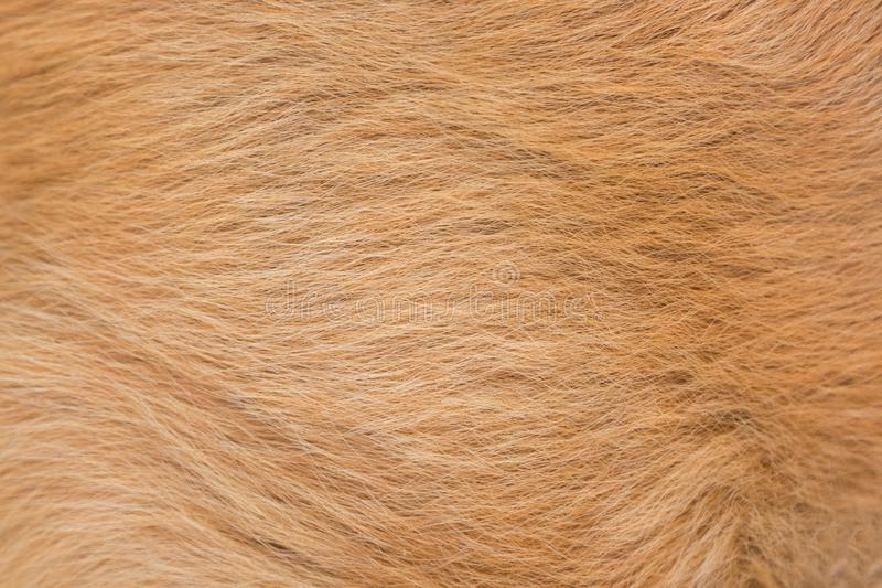 Macro texture rouge ou brune de fourrure de cheveux de chien Fond animal d'abrégé sur fourrure de chien photographie stock
