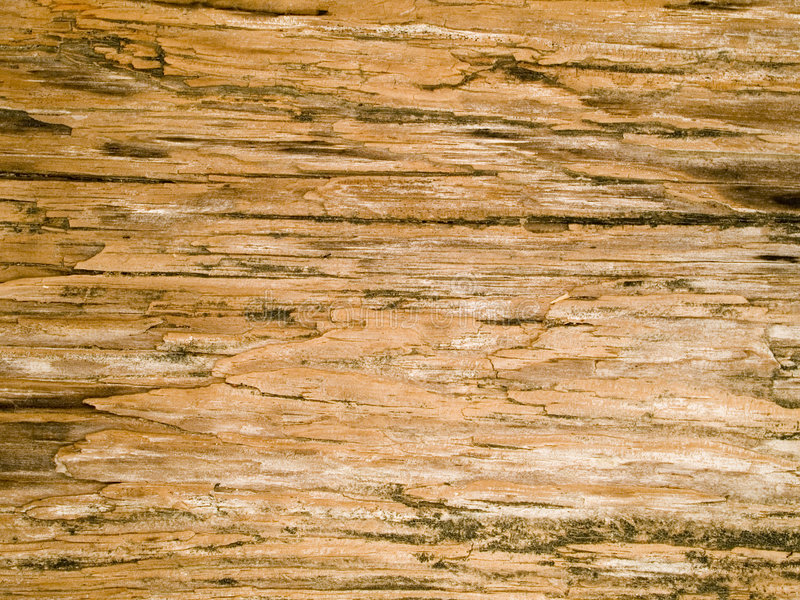 Macro textuur - hout - korrel stock afbeeldingen