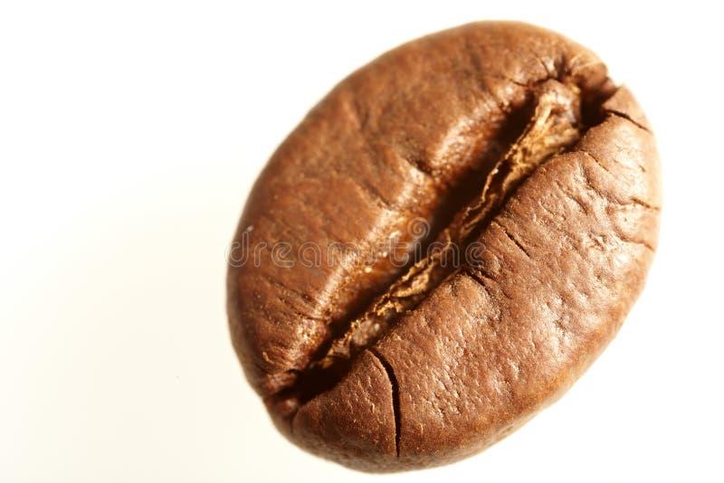 Grains de café macro photo libre de droits