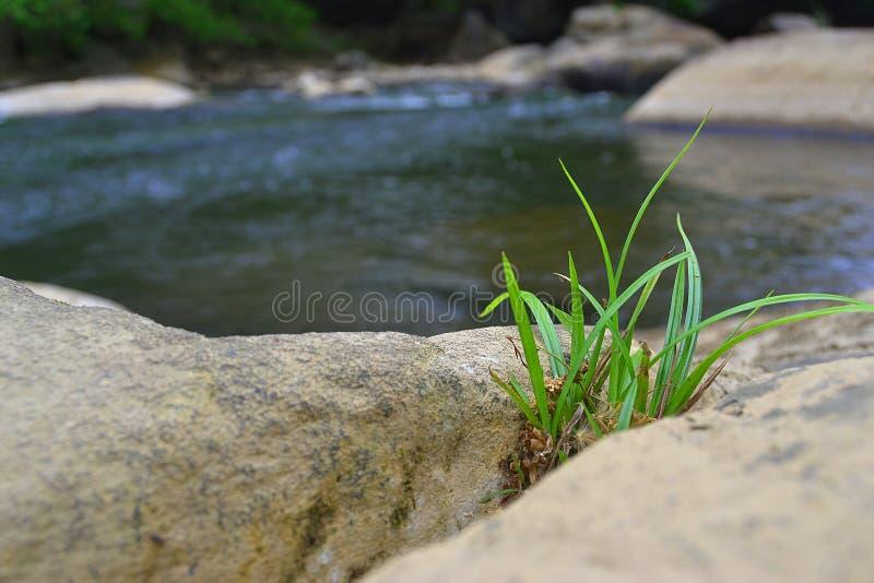 Macro tir d'herbe images stock