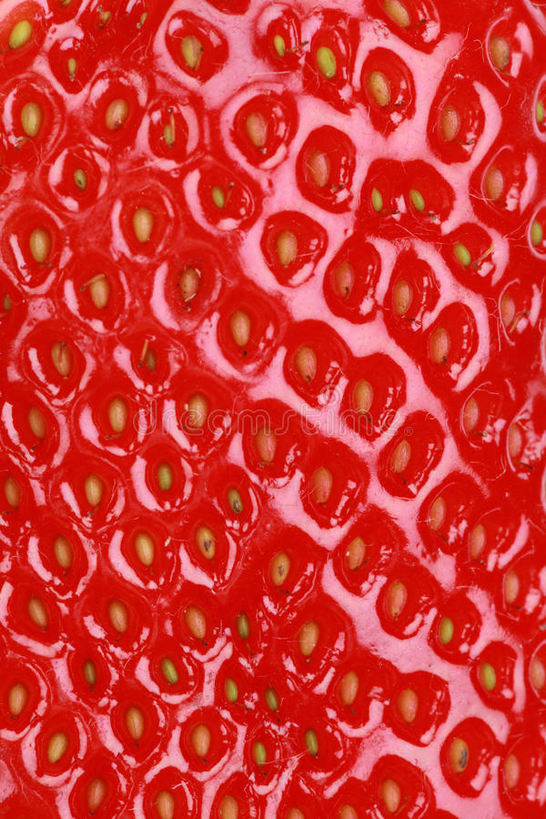 Macro tir d'une fraise image stock