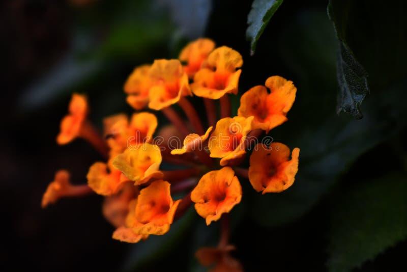 Macro tir des fleurs dans le jardin image stock