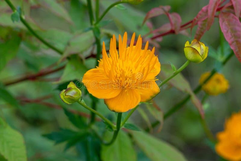 Macro tir des fleurs oranges à un foyer mou images libres de droits