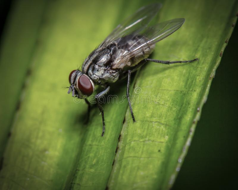 Macro tir une mouche se reposant sur la feuille photo stock