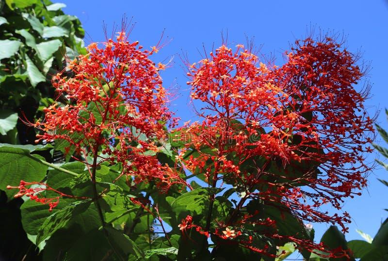 Macro tirs colorés des fleurs sur l'île des Seychelles photo libre de droits