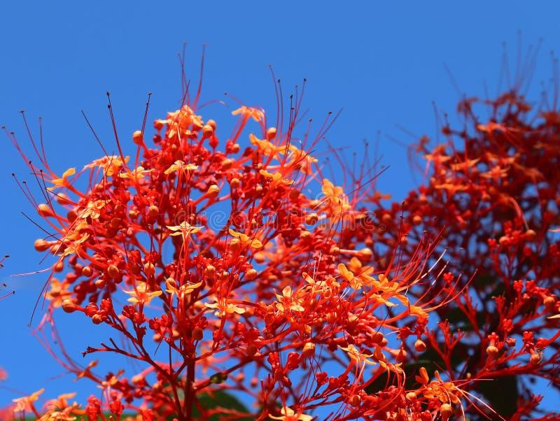 Macro tirs colorés des fleurs sur l'île des Seychelles photographie stock