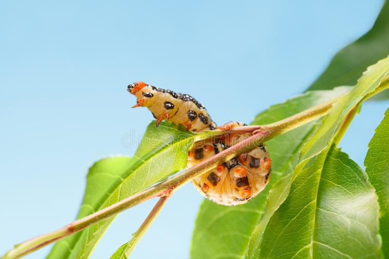 Ant sit on brunch stock image  Image of militant, formicidae - 34600953