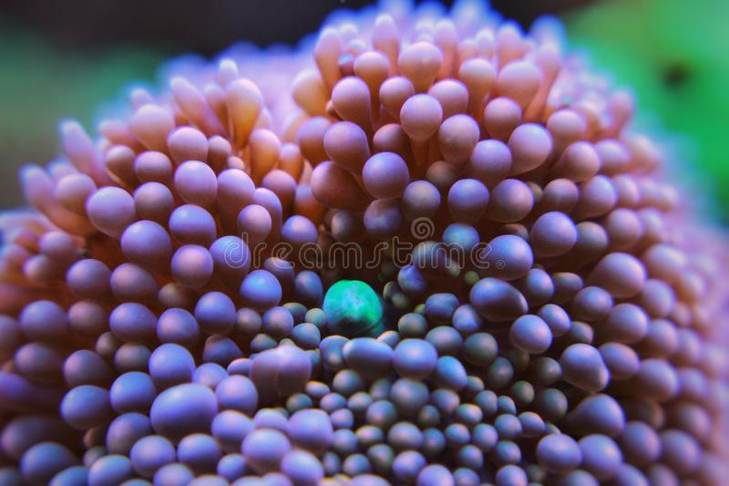 Macro underwater photography. Macro Photography on corals royalty free stock image
