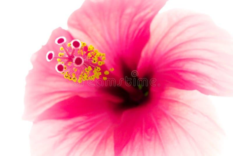 Macro van bloem royalty-vrije stock foto