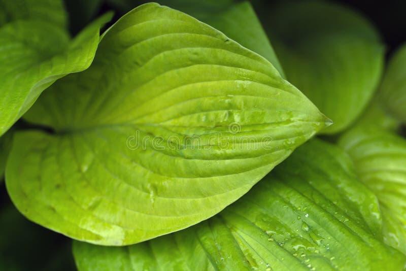 Macro van een blad met dauwdalingen die wordt geschoten stock foto