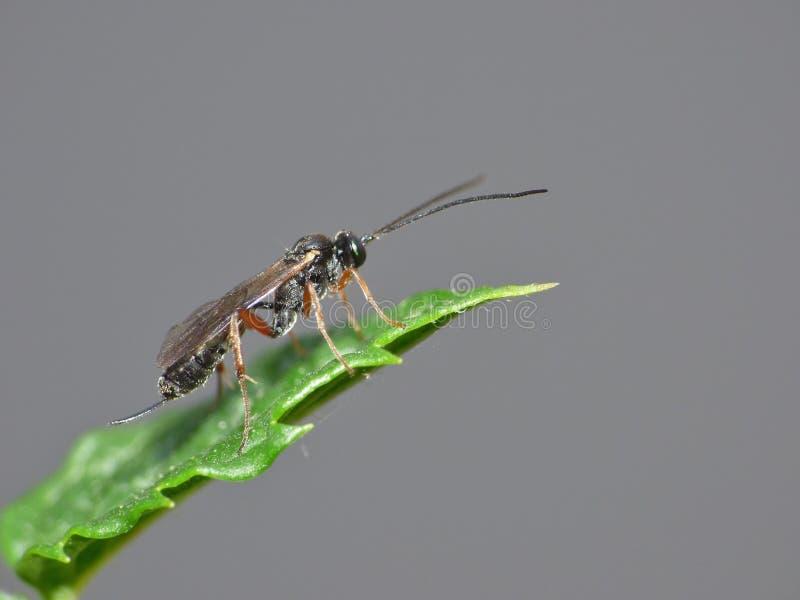 Macro van een kleine vlieg op een installatie in de tuin foto genomen int. hij het UK royalty-vrije stock afbeeldingen
