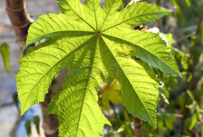 Macro van een mooi groen blad wordt geschoten dat royalty-vrije stock afbeelding