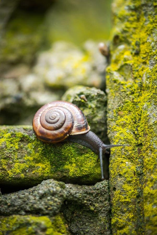 Macro van een slak op een bemoste steenmuur die wordt geschoten royalty-vrije stock foto