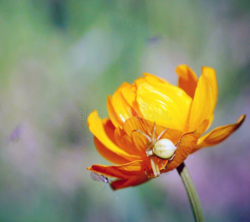 Macro van een spinzitting op de heldere mooie bloem stock afbeelding