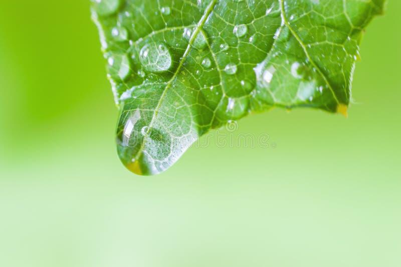 Macro van groen blad royalty-vrije stock afbeeldingen